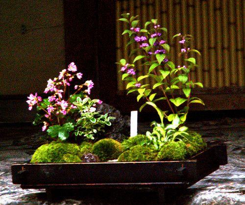 しゅみえんサロン - 趣味の園芸