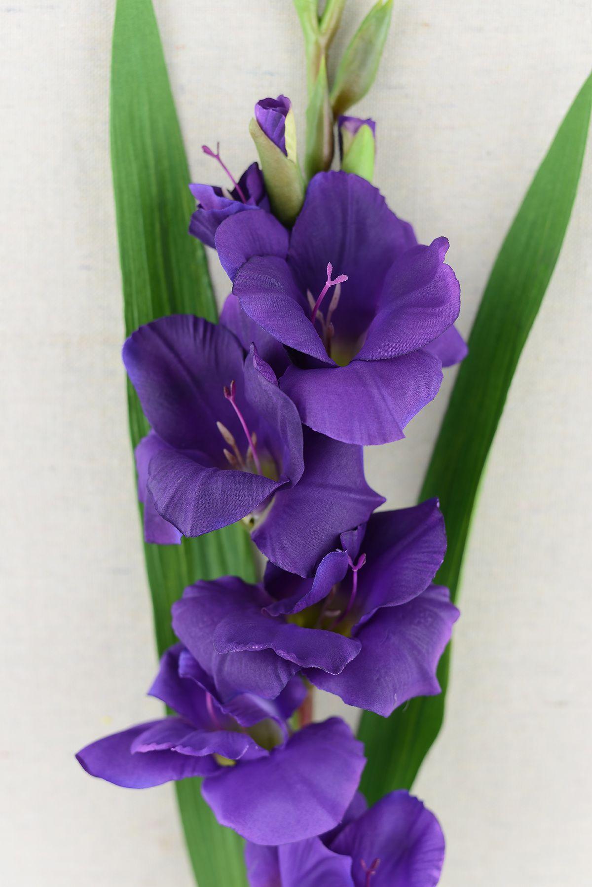 Gladiolus Flower Purple 33in Gladiolus Flower Elephant Ear