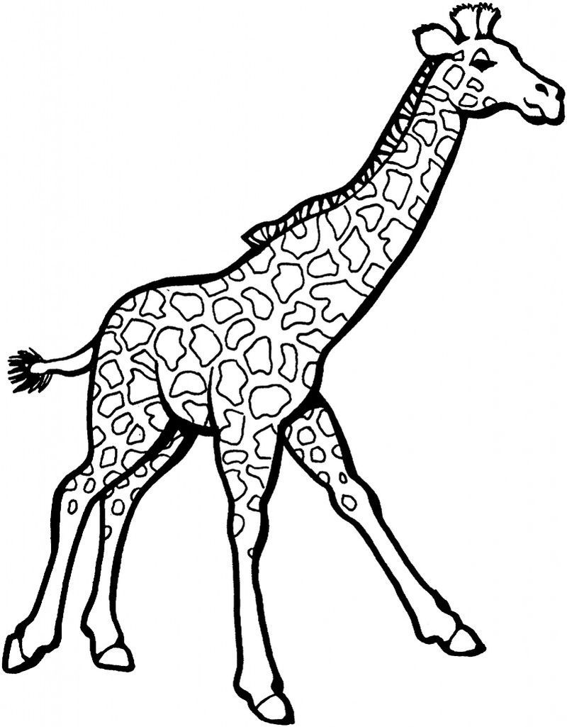 Cute Giraffe Coloring Pages Giraffe coloring pages, Zoo
