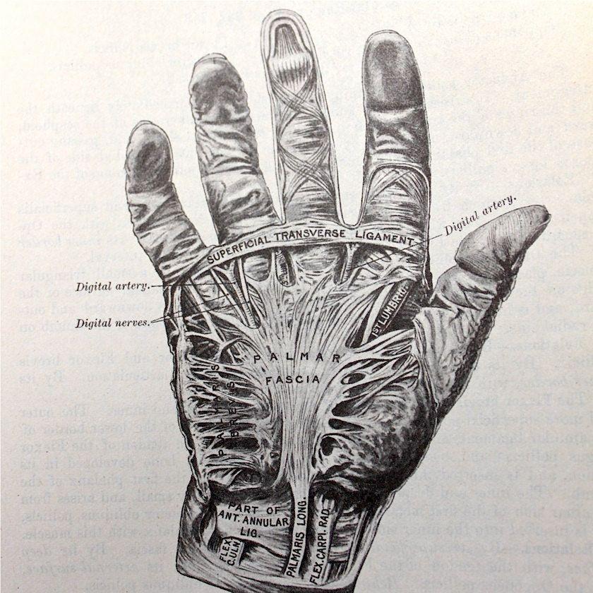 Sale 30 Off Vintage Anatomical Drawing Medical Illustration