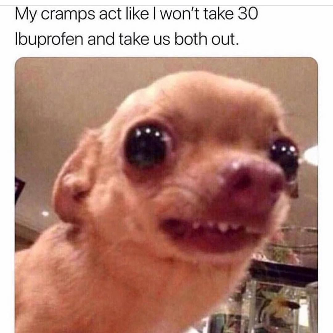 Die Besten Baby Hund Memes Hafft De