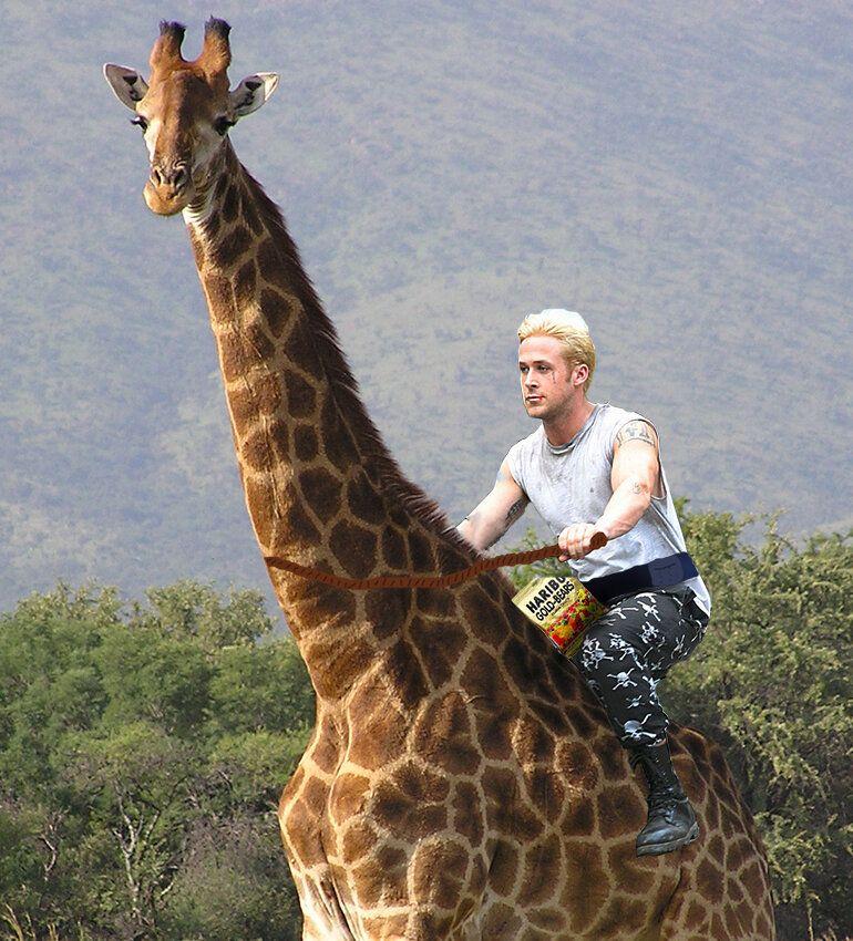 Ryan Gosling Riding A Giraffe While Eating Gummy Bears Hey Girl
