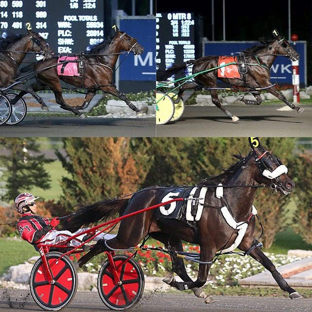The big question of the weekend....who are you betting in the $1,000,000 Pepsi North America Cup? In The Arsenal (top left), Wakizashi Hanover (top right), Wiggle It Jiggleit (bottom), or someone else? Tell us in the comments and check out lots of North America Cup content on our website! New Image Media photo. #harnessracing #HorseRacing #Horses #Horse #Standardbred #Stakes #Standardbreds #Pacing #Pace #Pacer #Racing #NACup15 #Mohawk