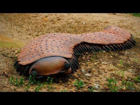 Si Vous Voyez Cette Creature Courrez Chercher De L Aide Youtube Pfeilgiftfrosch Spinnentiere Spinnenarten