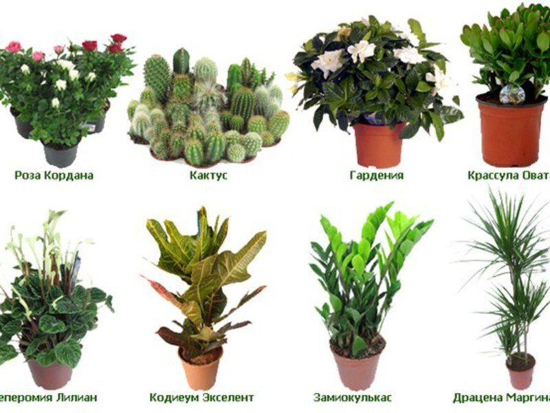 историей вдохновились поиск названия растения по картинке этой