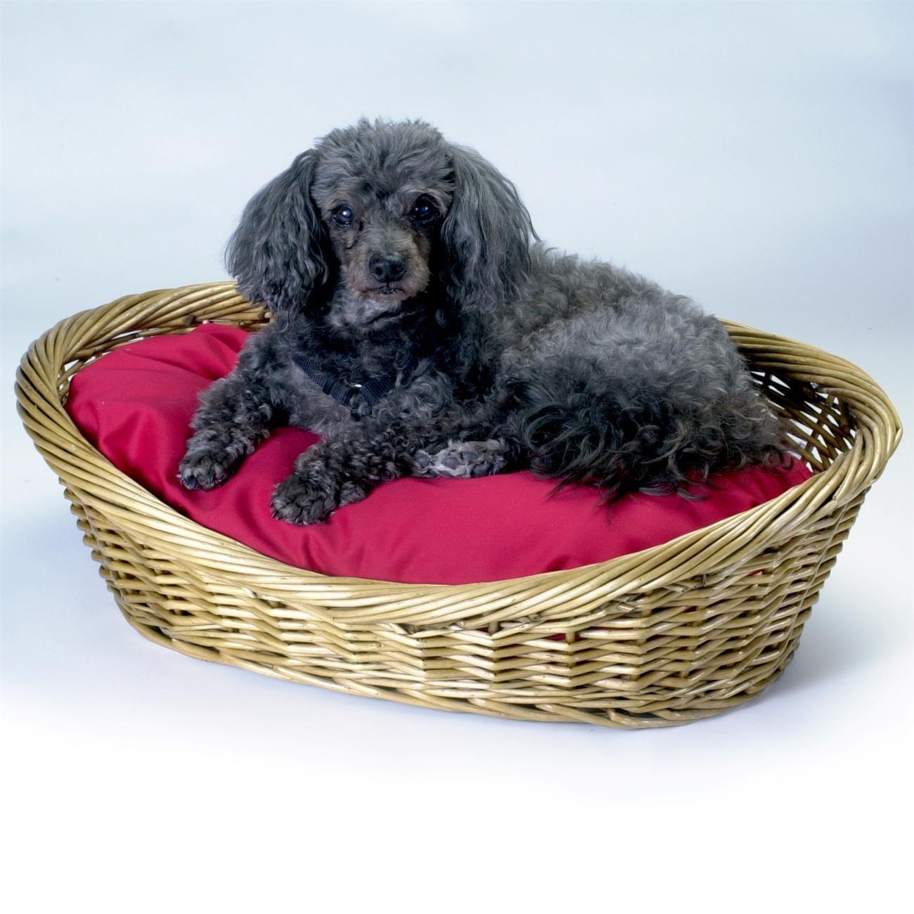 Wicker Dog Basket And Bed Dog basket, Pet beds, Basket