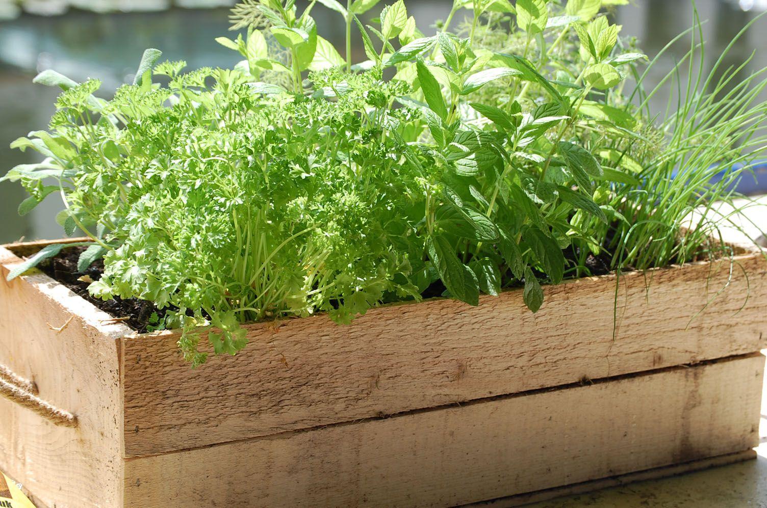 Landscaping With Herbs : Herb gardens herbs garden gardening planting tips