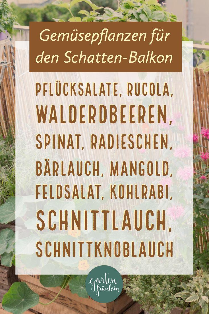 Pflanzen für den Schatten-Balkon