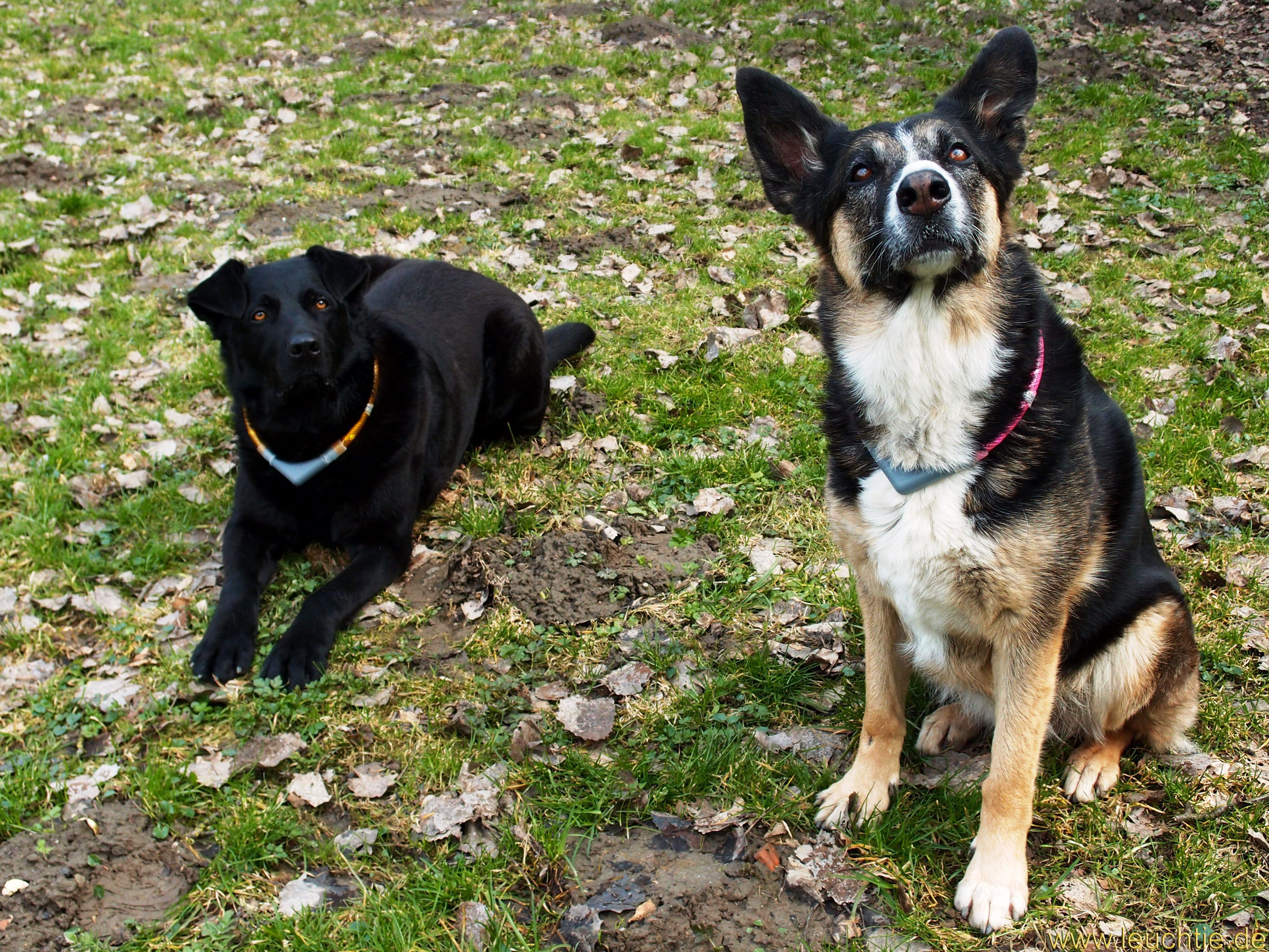 Led Leuchthalsband Leuchtie Plus Für Hunde Als Eine Spende Für Das