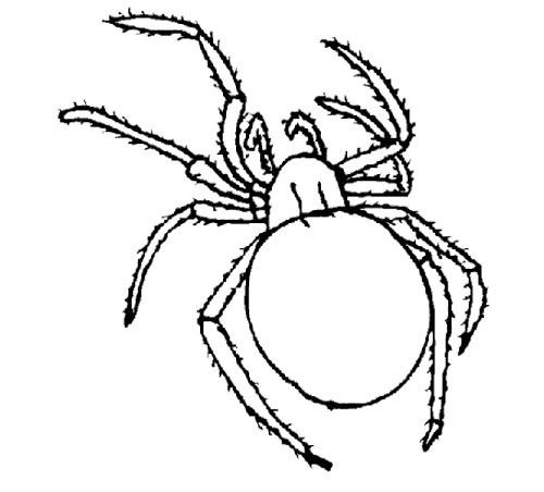 Cartoon Spiders Coloring Page