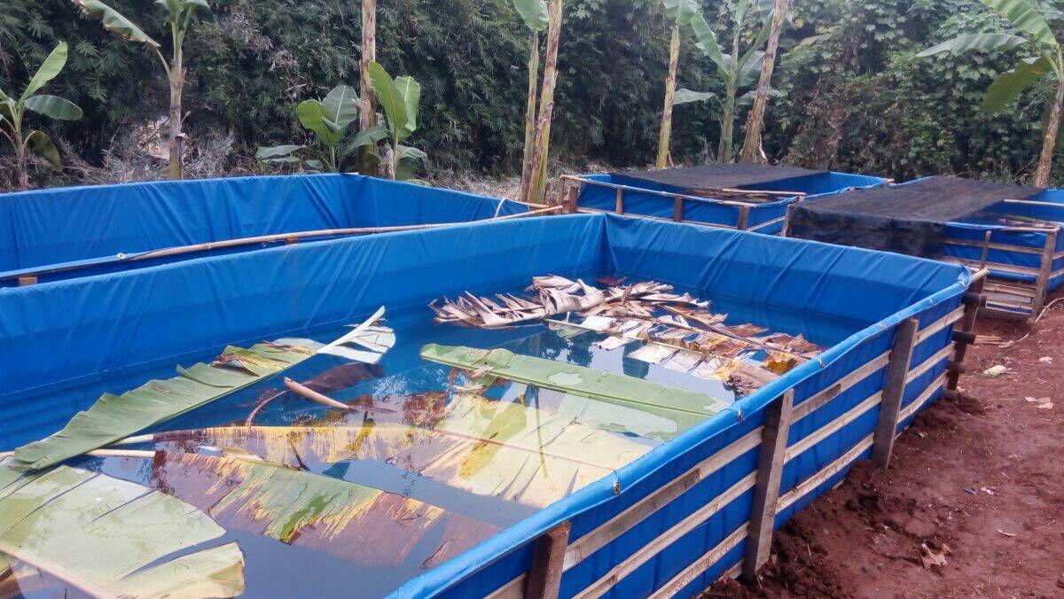 Foto Tambak Ikan