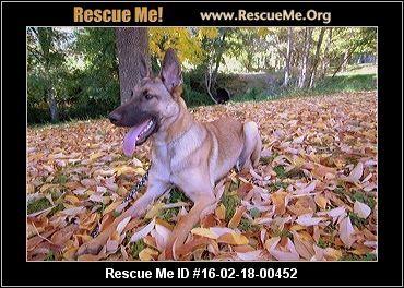 Oregon German Shepherd Rescue Adoptions Rescueme Org German