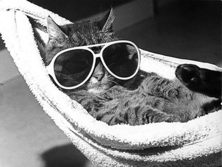 Os gatos não são somente conhecidos pelo seu mau génio, mas também pela sua capacidade de relaxar – e o que queremos dizer é total relaxamento.