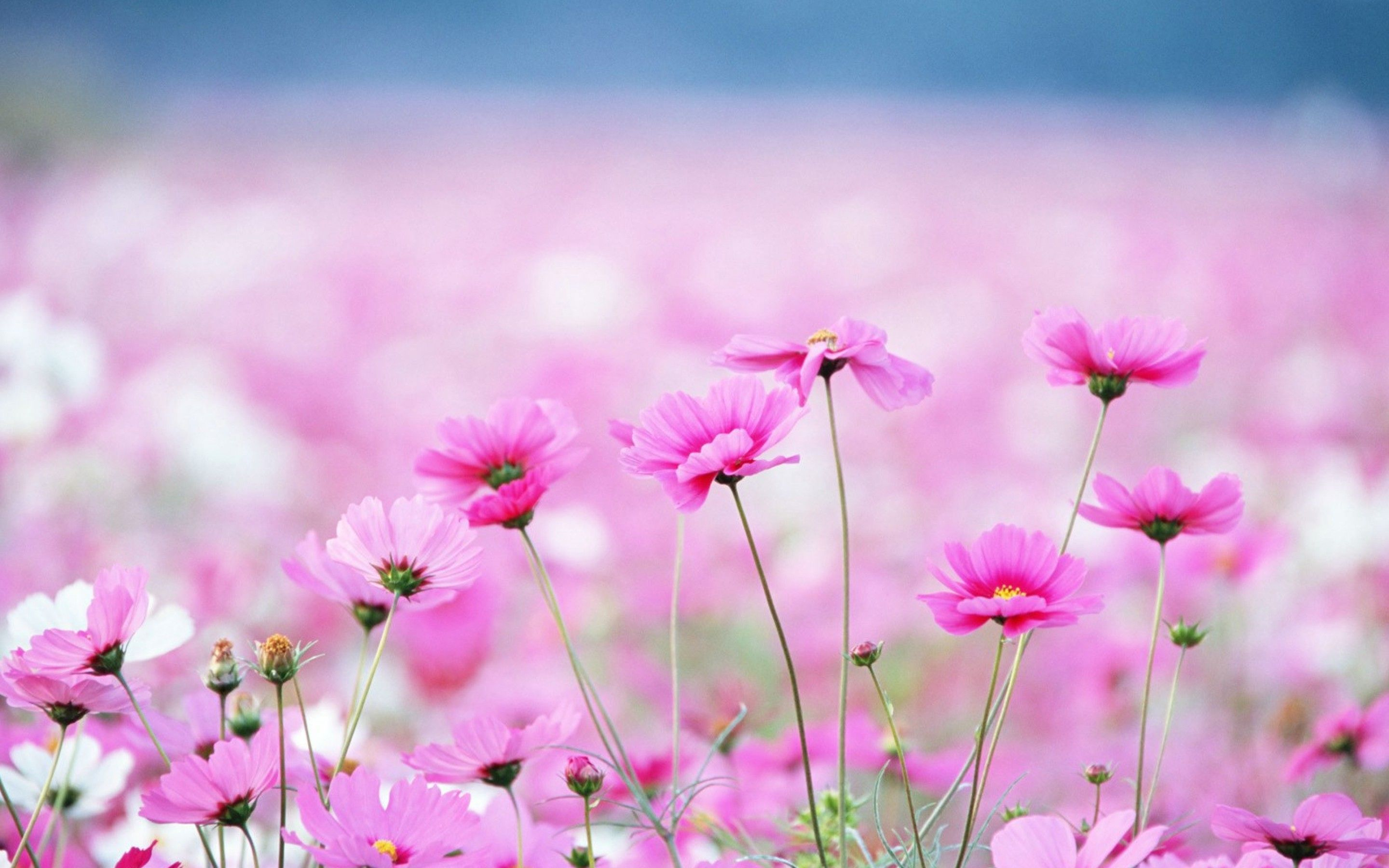 Song ng tm vi google flowers tea coffe book pinterest explore pretty flowers amazing flowers and more mightylinksfo Images