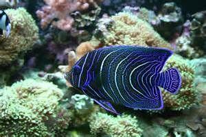 Listing Names of aquarium fish in Alphabetical Order - Bing images