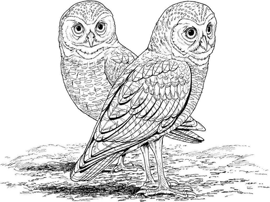 Owl Coloring Book Pages | Around my house | Pinterest