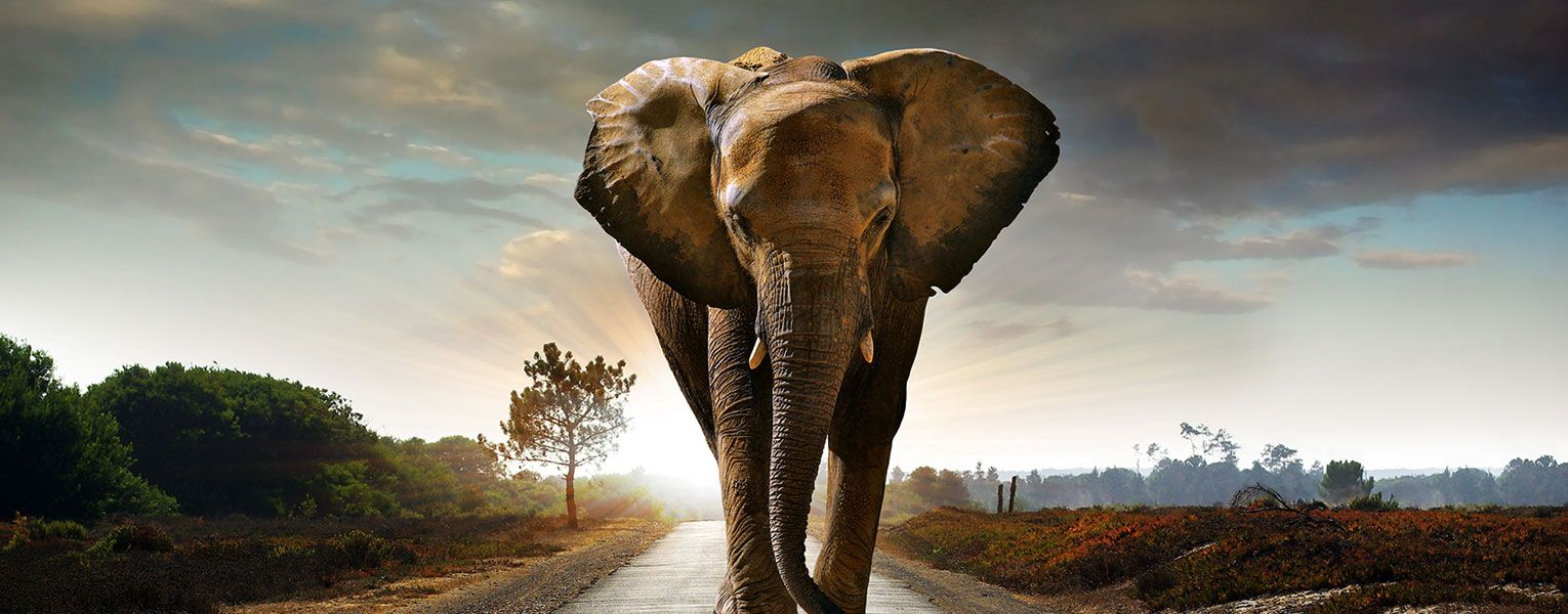 Backpack Through Africa from Selous African Safaris & Tours