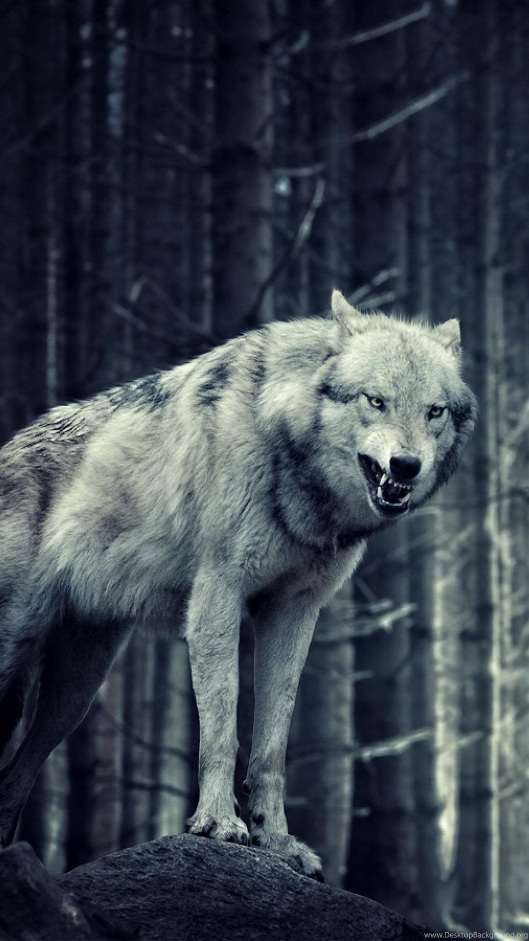 Pin by Aak123 Aak123 on Game of thrones Angry wolf, Wolf