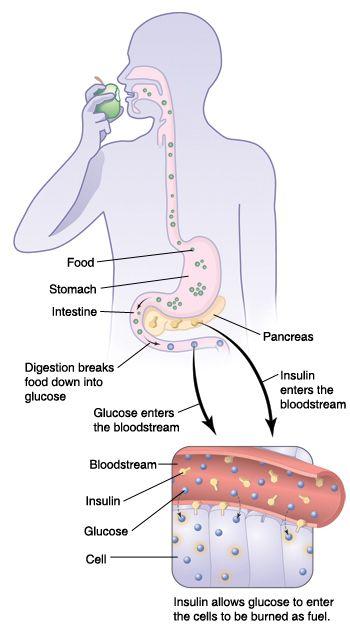 microwave fat loss