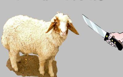 صور خروف العيد 2012 صور خرفان مضحكة لعيد الاضحى 2012 صور العيد 1433 منتديات قلبنا Blog