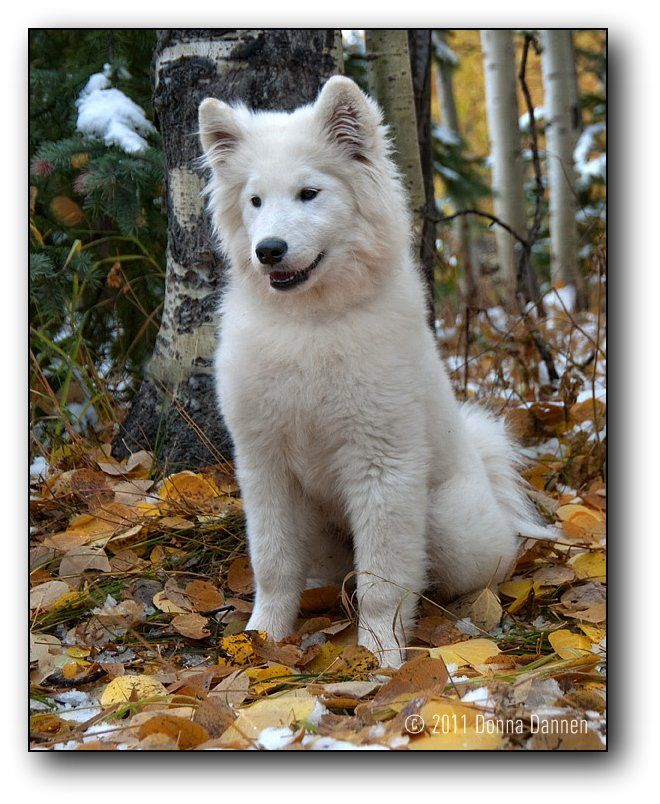 Spirit in the Leaves | Dogs and all the things I love about