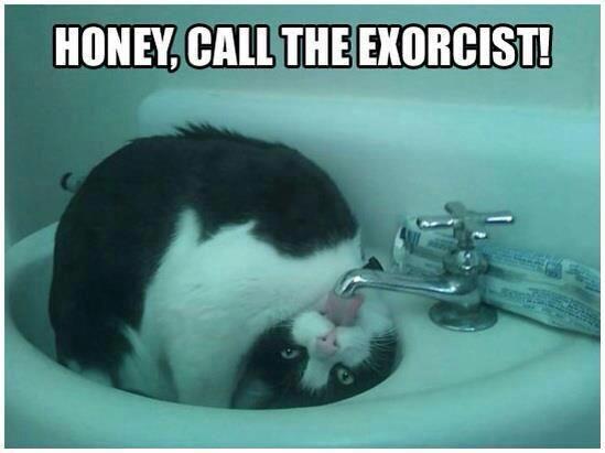 Honey Call the Exorcist