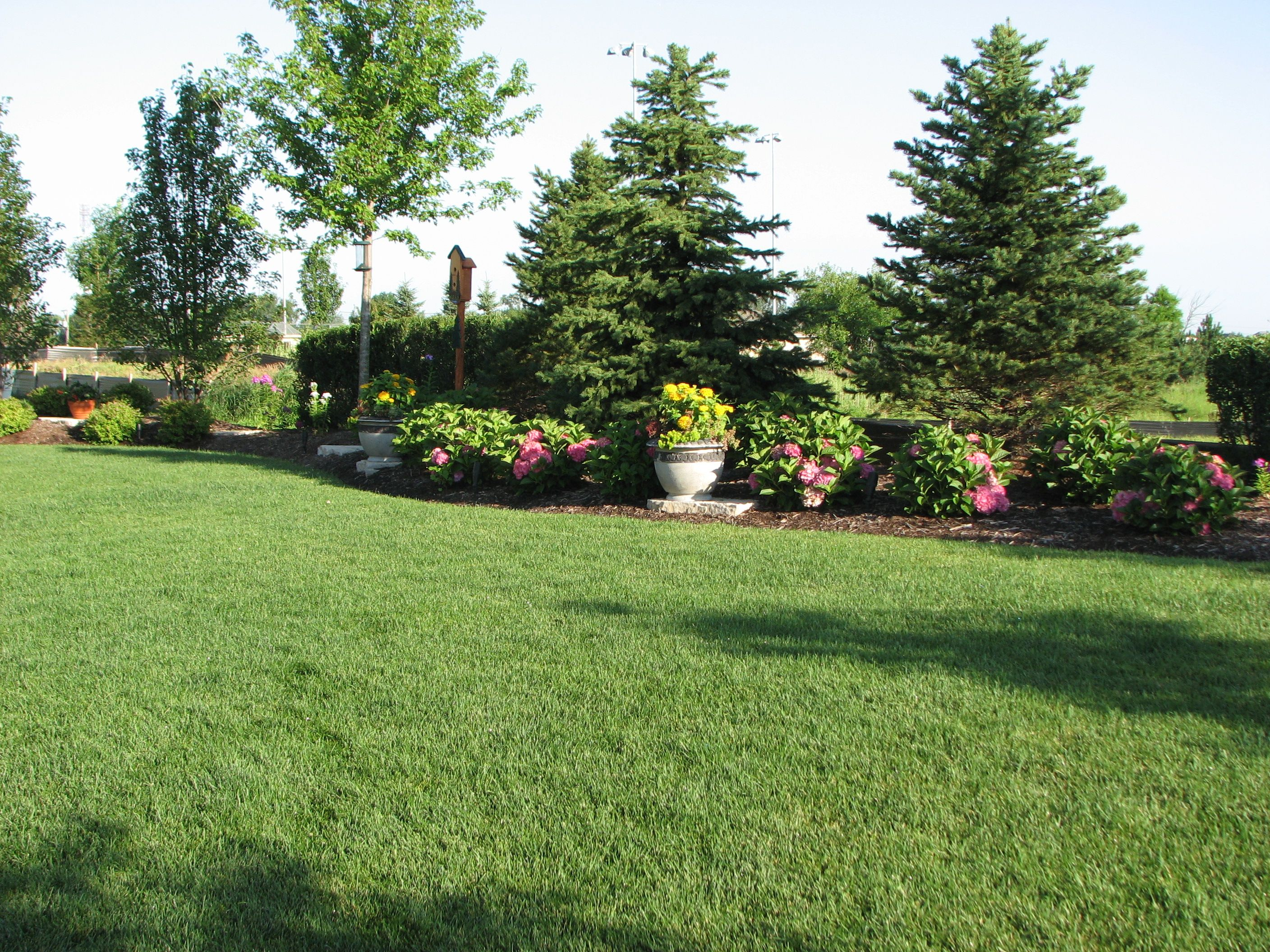 Backyard landscaping for privacy existing home for Home and garden landscaping