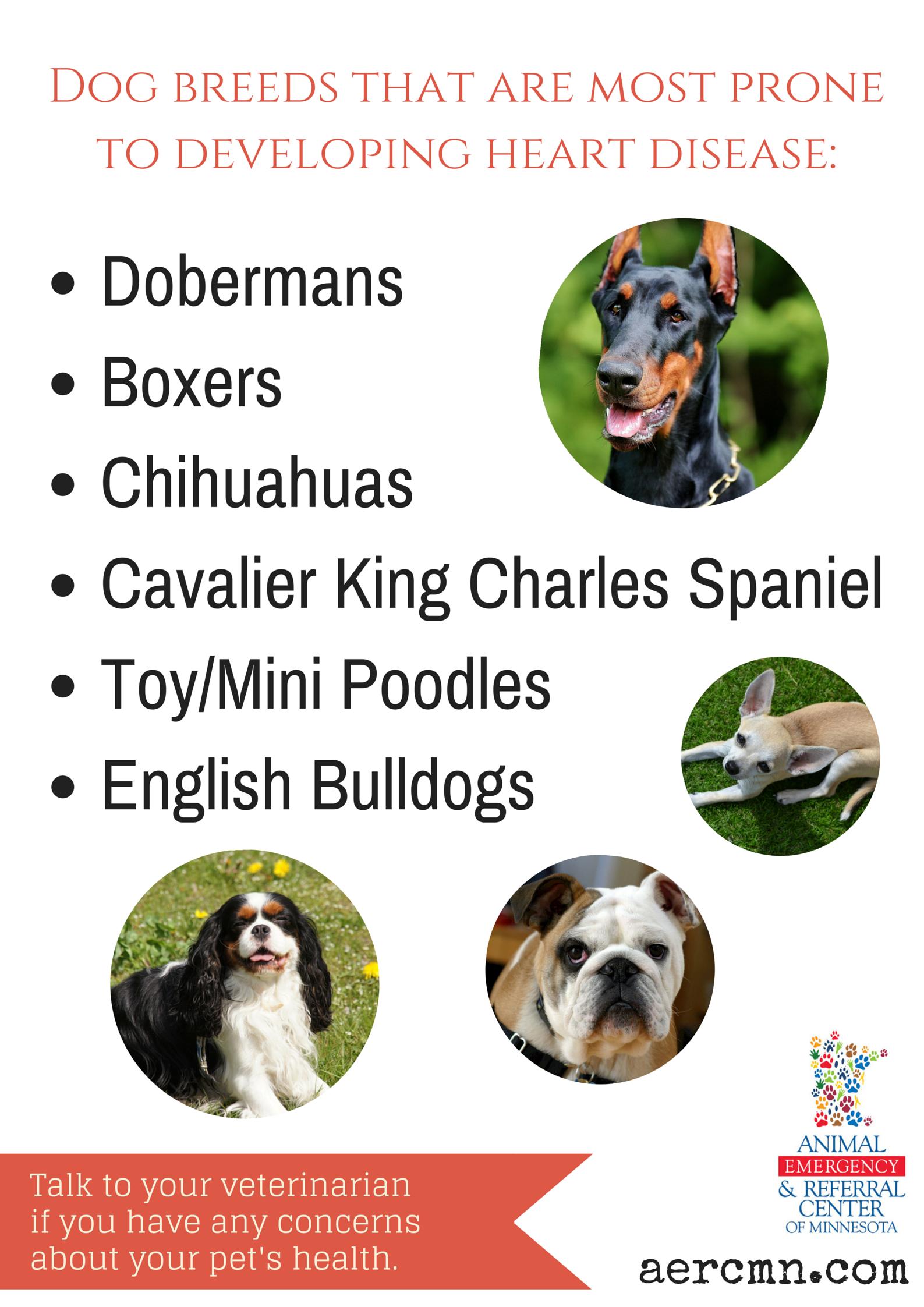 Pet Heart Murmurs Pet health, Pets, Heart murmur