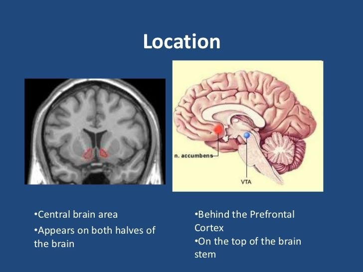 Image result for nucleus accumbens neuro pinterest nucleus image result for nucleus accumbens ccuart Images