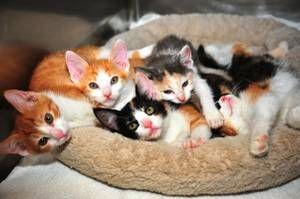 Albany Ny Pets Craigslist Pets Feline Animals