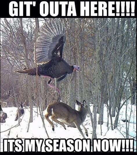 turkey season meme