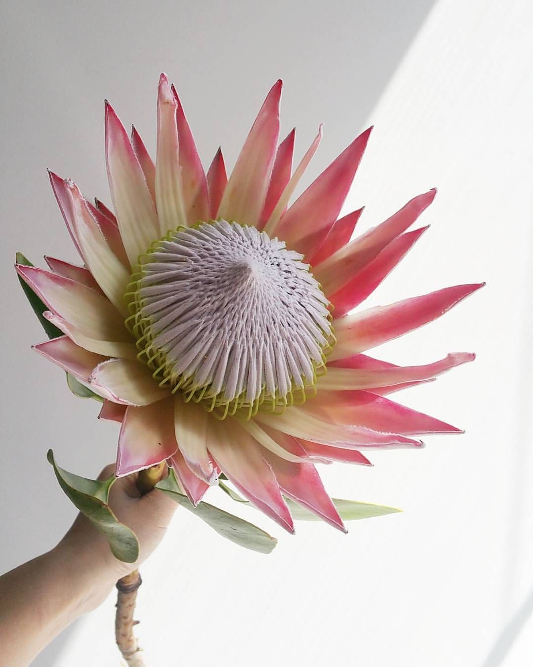 1 567 Likes 23 Comments Bloombox Co Sydney Melbourne Bloomboxco On Instagram Last Week Melbourne Customers Found One Flower Designs Protea Art Floral