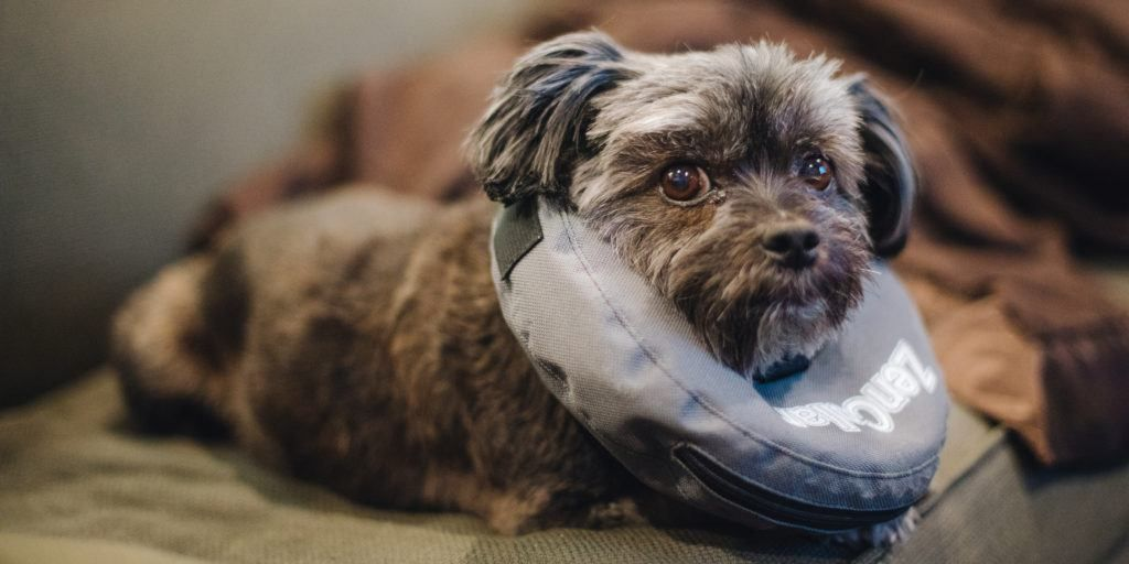 The Best Pet Insurance Cat insurance, Pet insurance