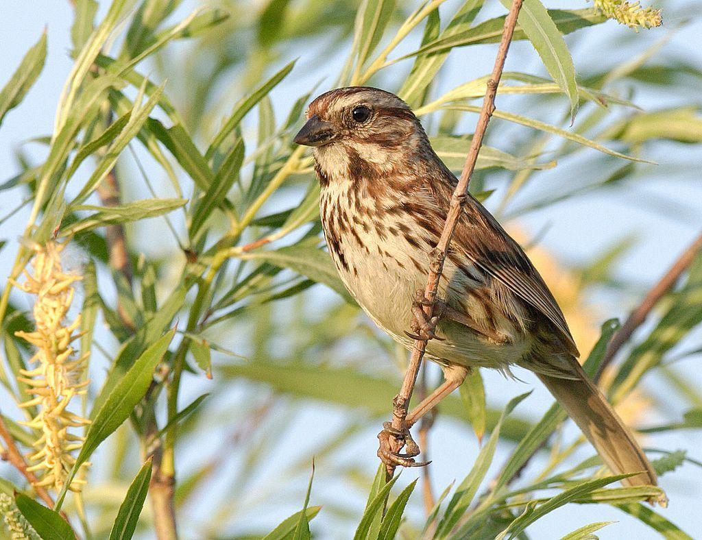 El estrés de la ciudad también afecta a los pájaros: los hace más agresivos http://www.elmundo.es/ciencia/2016/08/18/57b5d37022601d606f8b45e7.html …