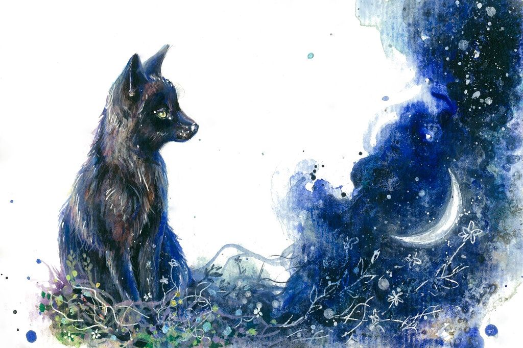 Blackfox Fox Art Fox Background Art Images