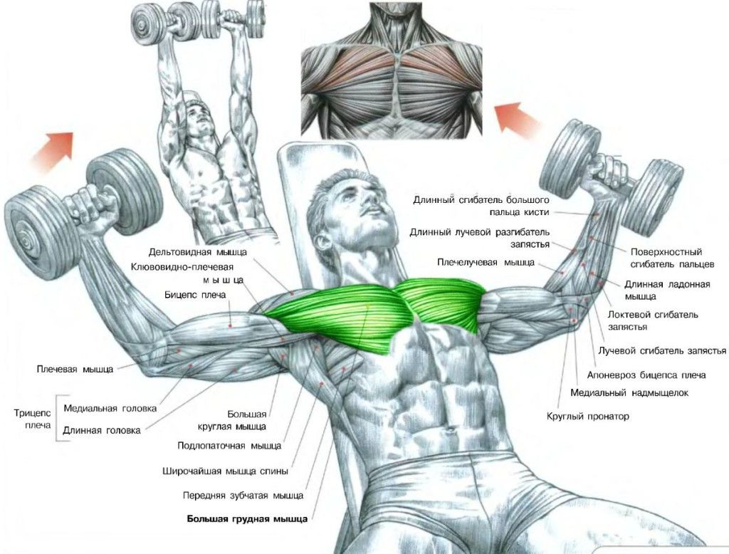 Exercise Instructions Incline Dumbbell Flys Hit The Upper
