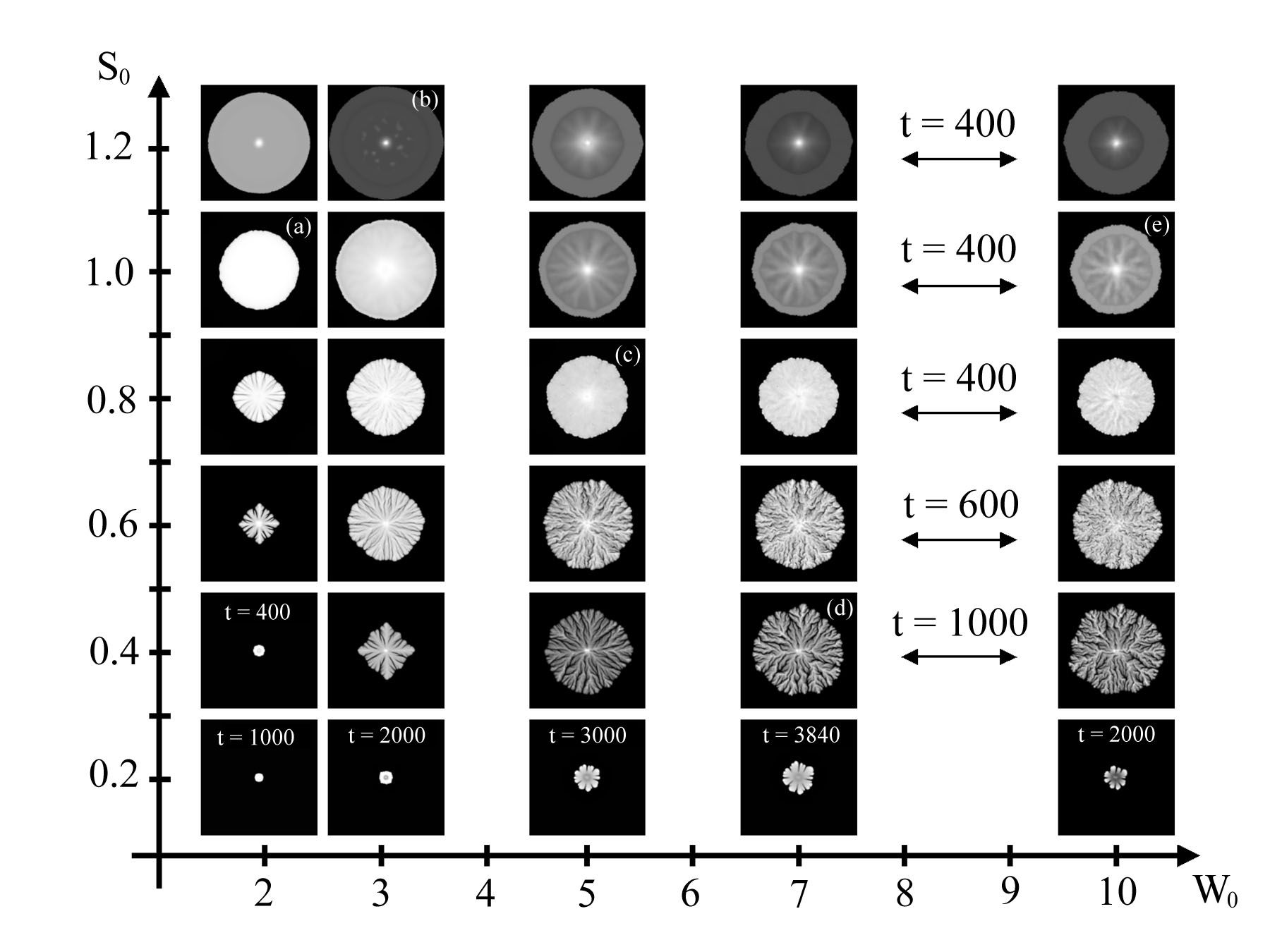 Bacterial Colony Morphology Chart Hunthankkco