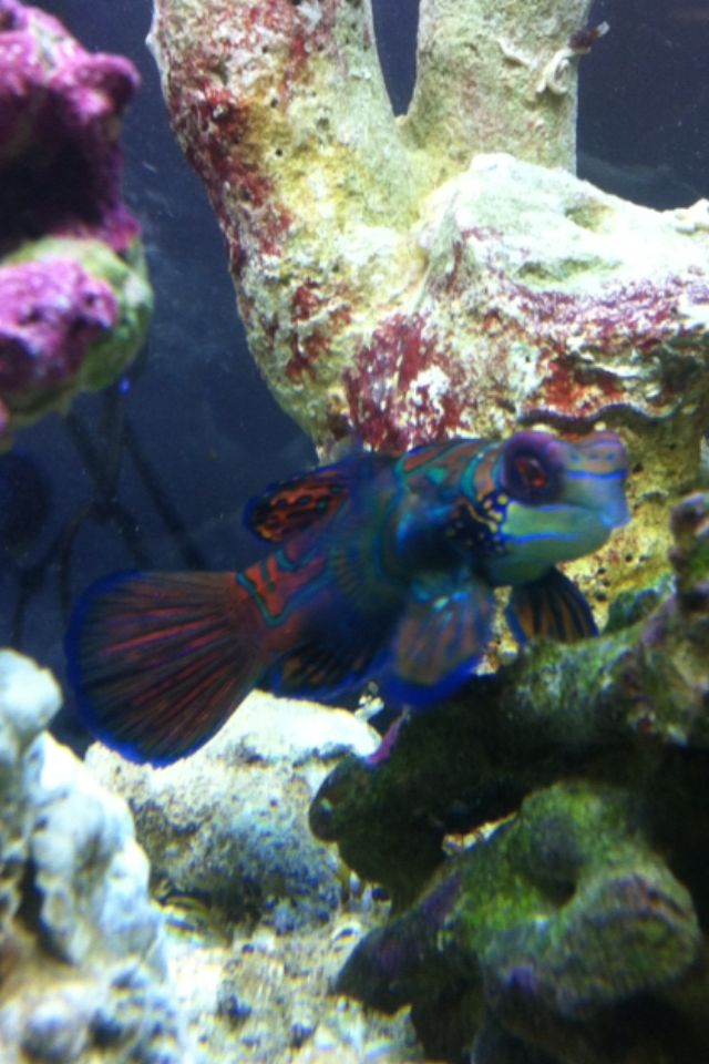 Our newest colorful goby