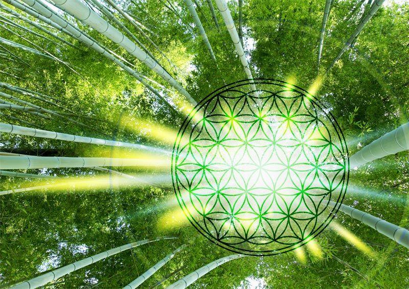 Blume des lebens im bambuswald motiv auf fotoleinwand bei uns im blume des lebens im bambuswald motiv auf fotoleinwand bei uns im shop http thecheapjerseys Image collections