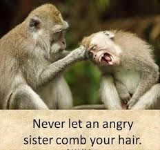 Funny Monkey Pictures Monkeys Funny Sisters Funny Funny Pictures