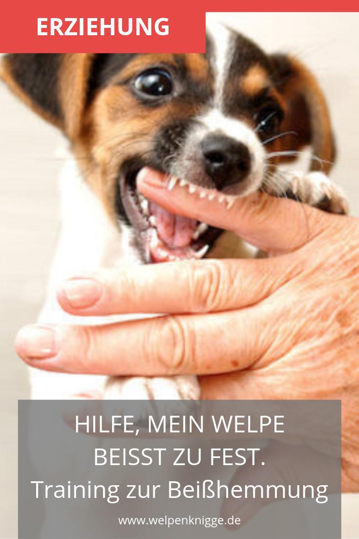 Welpe Beisst Das Kannst Du Dagegen Unternehmen Welpen Hunde Hundchen Ubung