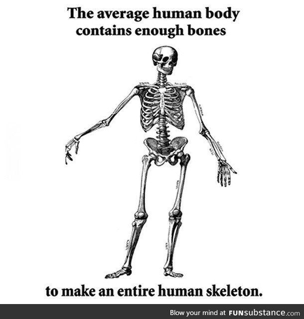 So I Made This Final Conclusion Where Is My Nobel Prize Funsubstance Science Fact Medical Memes Funny Skeleton