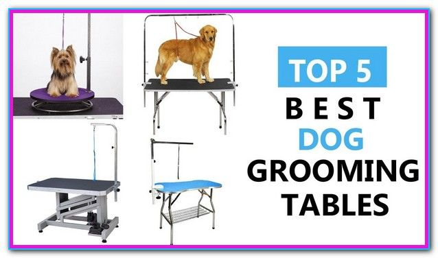 Best Grooming Table For Dogs Dog Training Obedience Dog Obedience Pet Dogs
