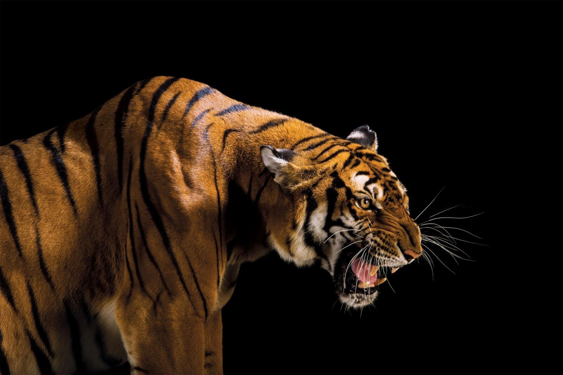 What we lose when animals go extinct Animals, Endangered