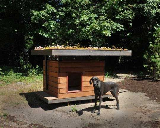 An Eco Doghouse For The Family Pet Dog Houses Dog House Plans
