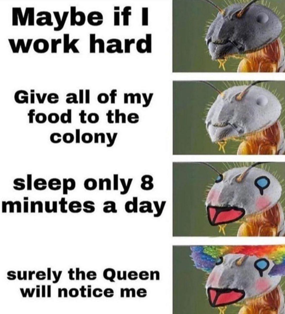 Meme S Quotes Memes Its Memes Laughing Memes Memes Quotes Funnie Memes I Meme Truthful Memes Happy Meme What Memes Enco Funny Memes Me Too Meme Memes