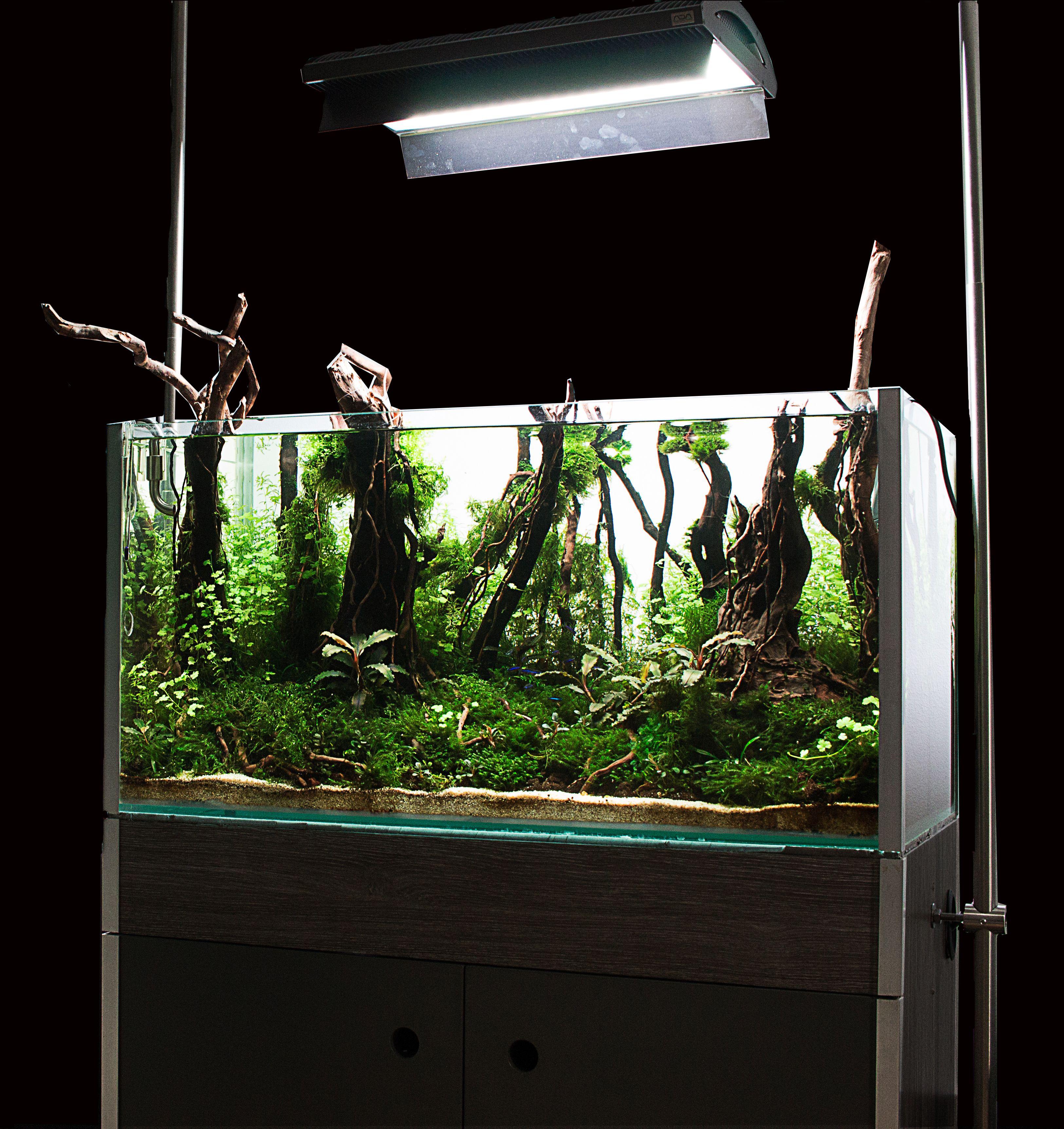 Forest aquascape. Aquarium aquascaping. 80x40x40 cm ...