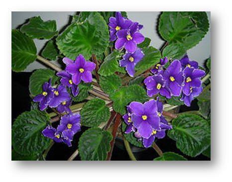encuentra este pin y muchos ms en plantas de rmbarrios plantas de interior