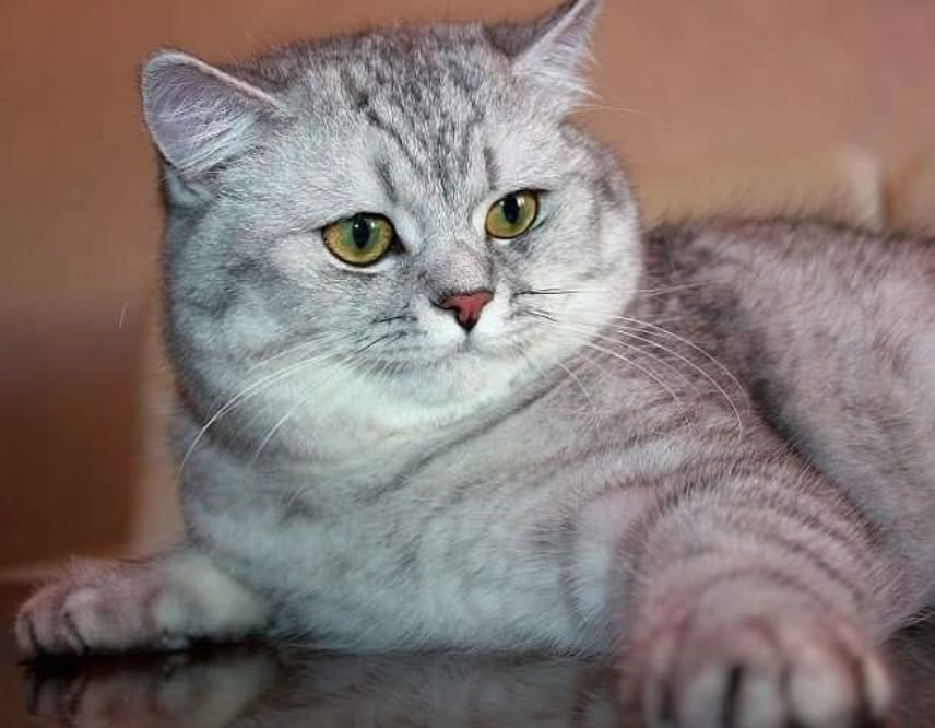 230 GenderNeutral Cat Names Cat names, Cats, Cute cats