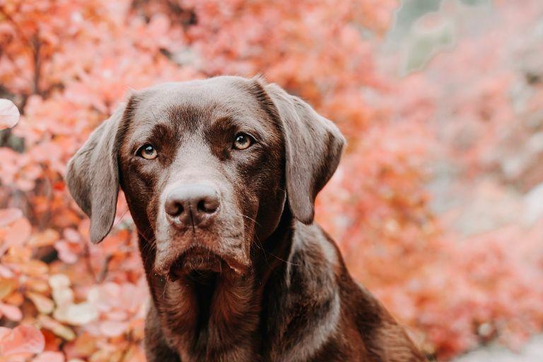 Hundeblog Uber Den Aufgeregten Hund Loki Der Labrador Seite 2 Von 15 Labrador Labrador Retriever Loki